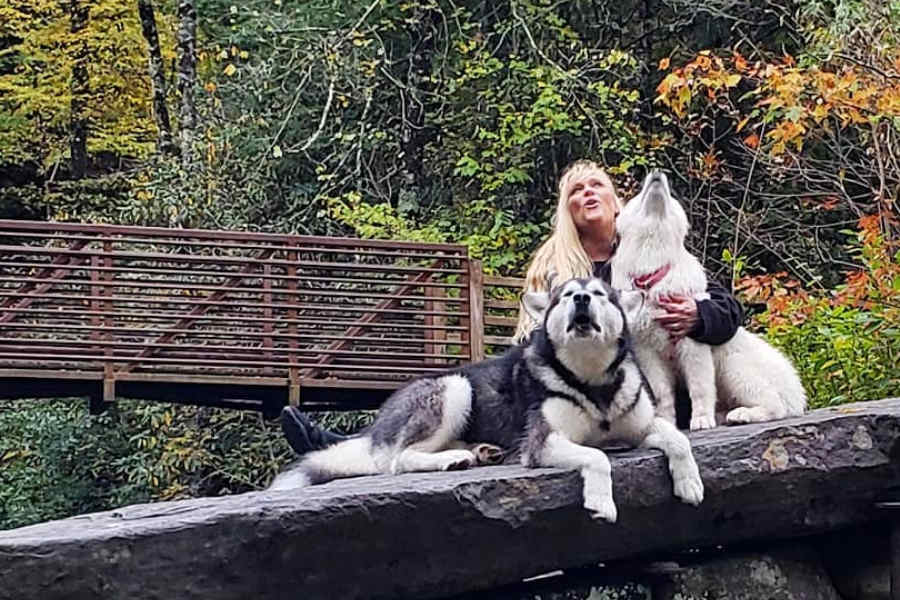 Alaskan Malamutes Tonka and Monroe (Photo: @tonkaandmonroethewaterwolves / Instagram)