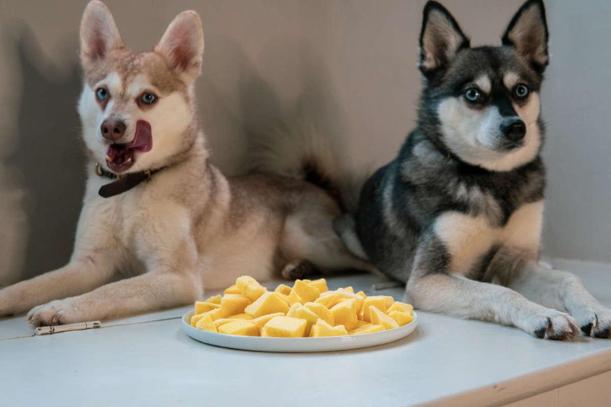 Klee Kai next to plate of Mango chunks (Photo: lifewithkleekai / Instagram)