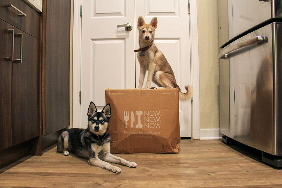 Copper and Skye the Alaskan Klee Kai with their first Nom Nom delivery (Photo: @lifewithkleekai / Instagram)