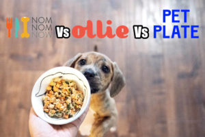 NomNomNow vs Ollie vs Pet Plate Reviews