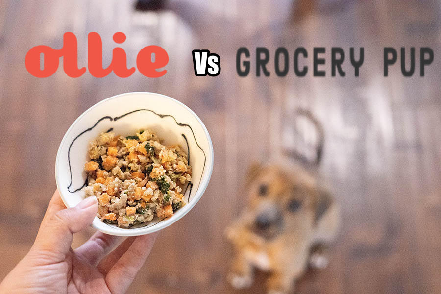 Ollie Vs Grocery Pup