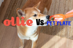 Ollie Vs Pet Plate Reviews