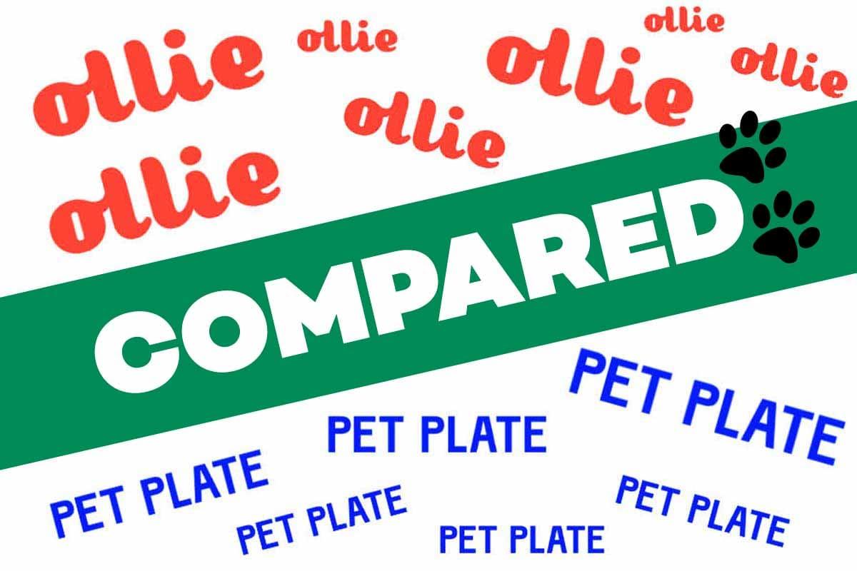Ollie vs Pet Plate