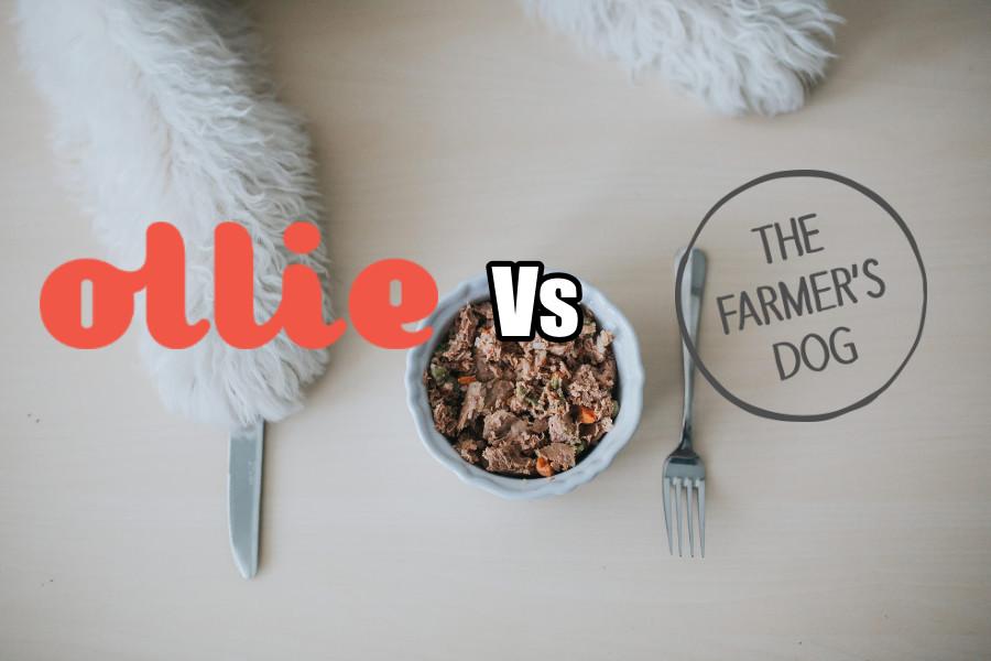 Ollie vs The Farmer's Dog