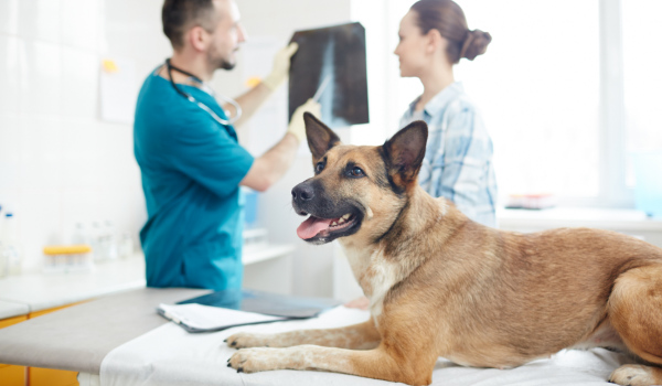 best pet insurance uk
