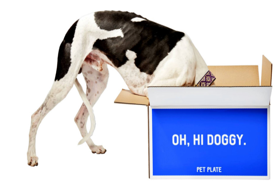 Pet Plate will offer a refund if your delivery arrives at room temperature (Photo: Pet Plate)