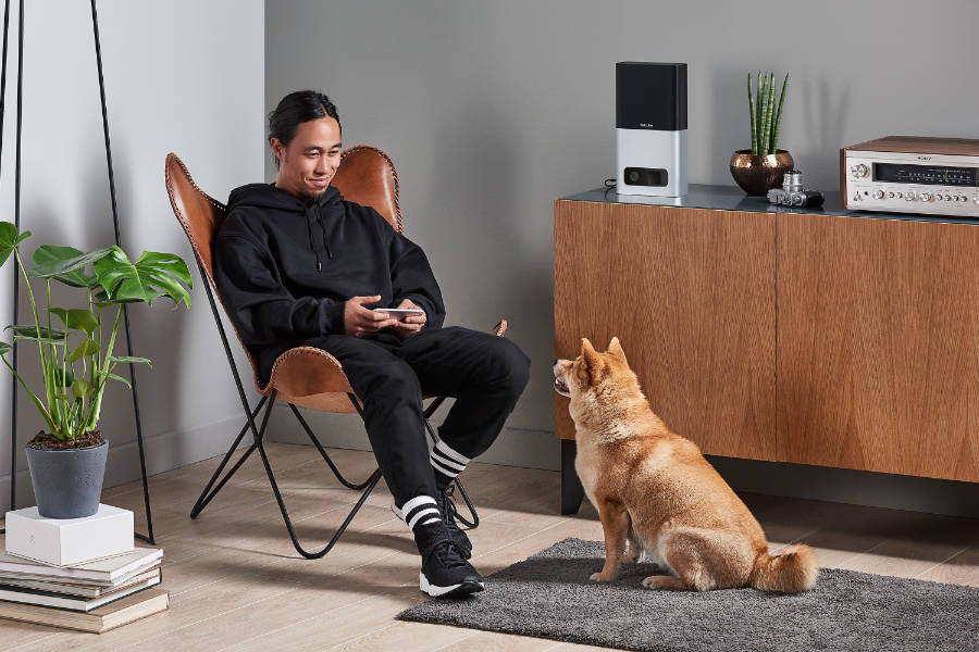 Shiba Inu and his owner relax with Petcube (Photo: Petcube)