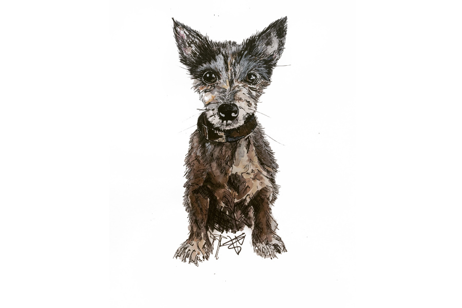 Pink Prints portrait of Terrier Cross
