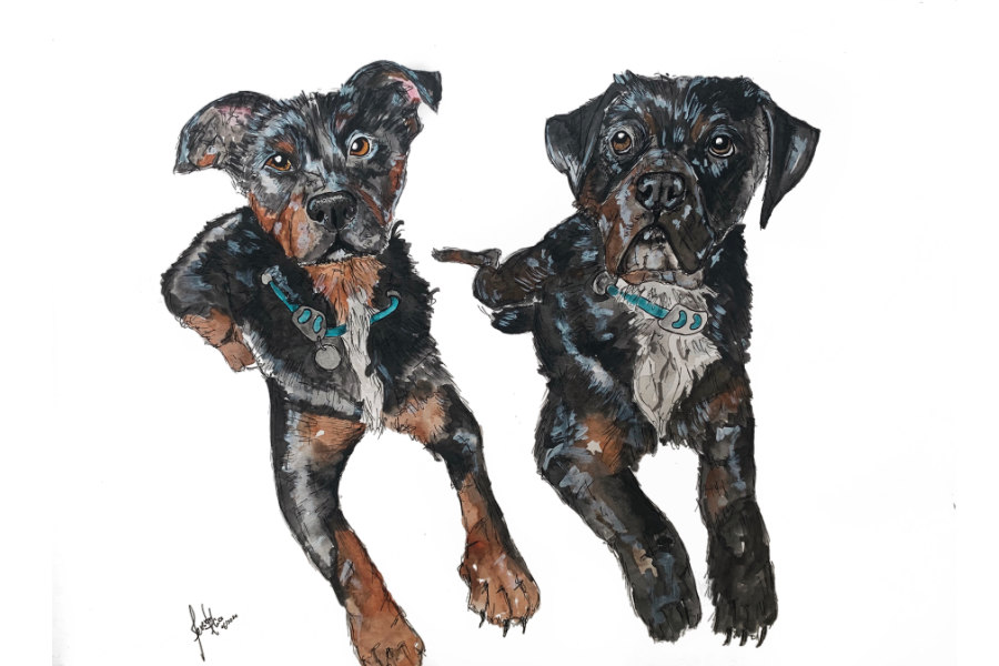 Pink Prints portrait of Rottweilers