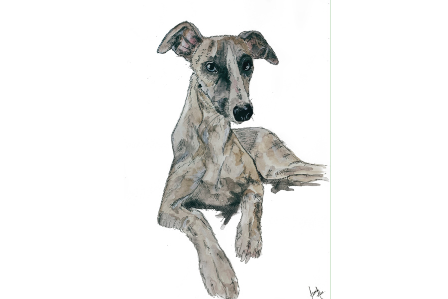 Pink Prints portrait of Whippet