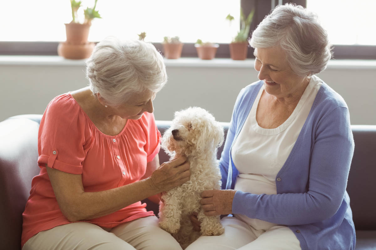 Poodle brings joy to seniors (Photo: Adobe Stock)