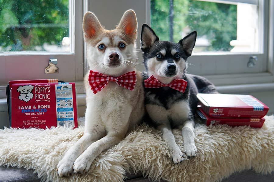 Skye and Copper with their Poppy's Picnic samples (Photo: lifewithkleekai / Instagram)