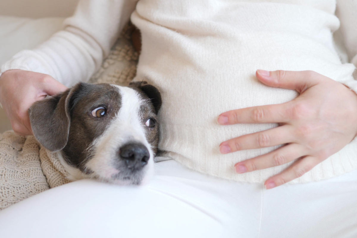 Dog relaxes with pregnant owner (Photo: Adobe Stock)