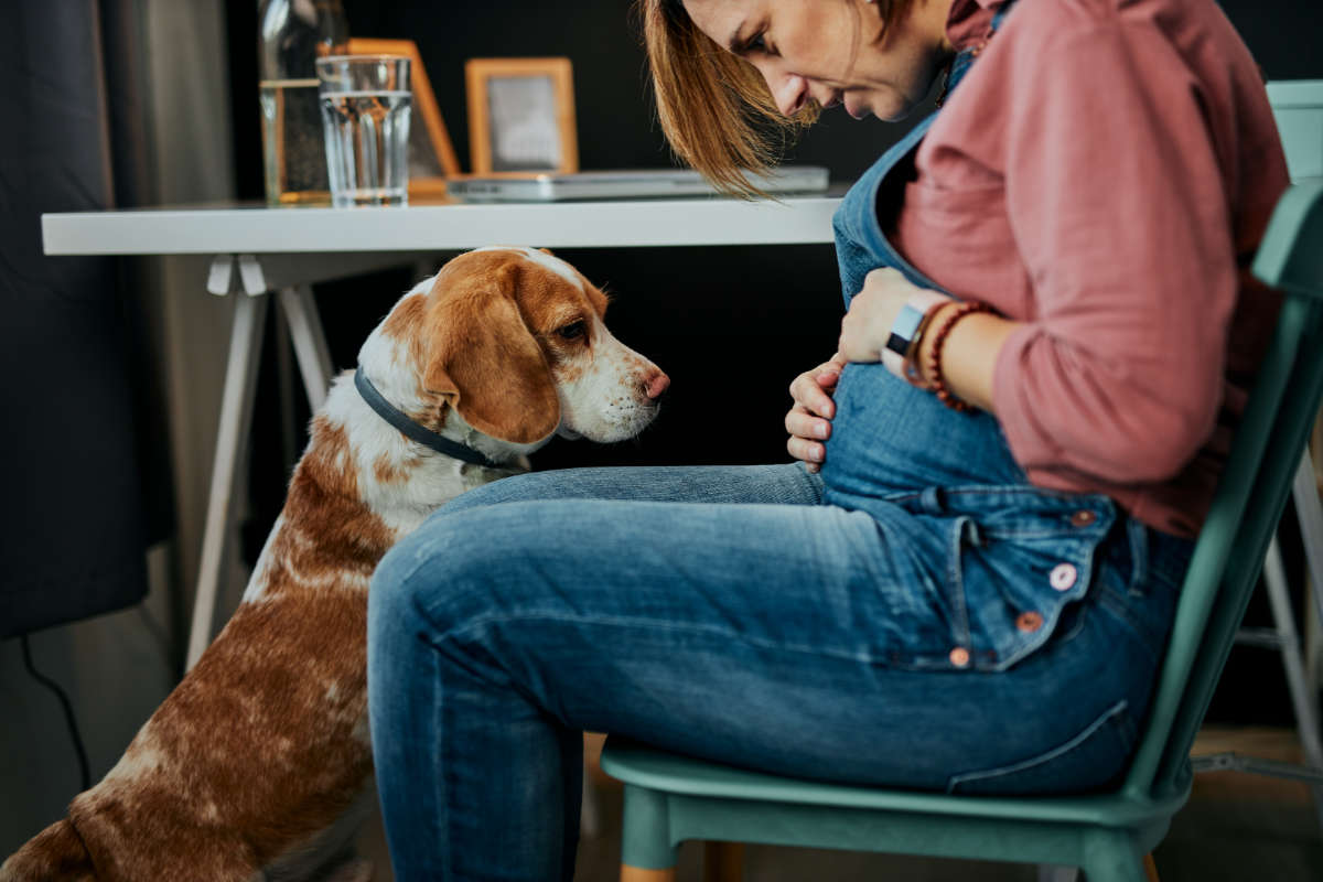 Pregnant woman plays with her dog in the office (Photo: Adobe)