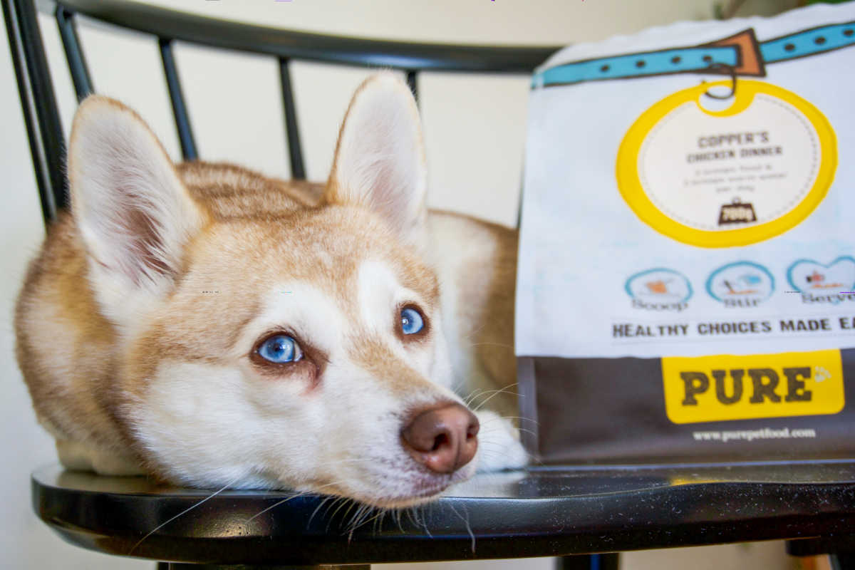 Alaskan Klee Kai with their Pure Pet Food (Photo: www.hellobark.com)