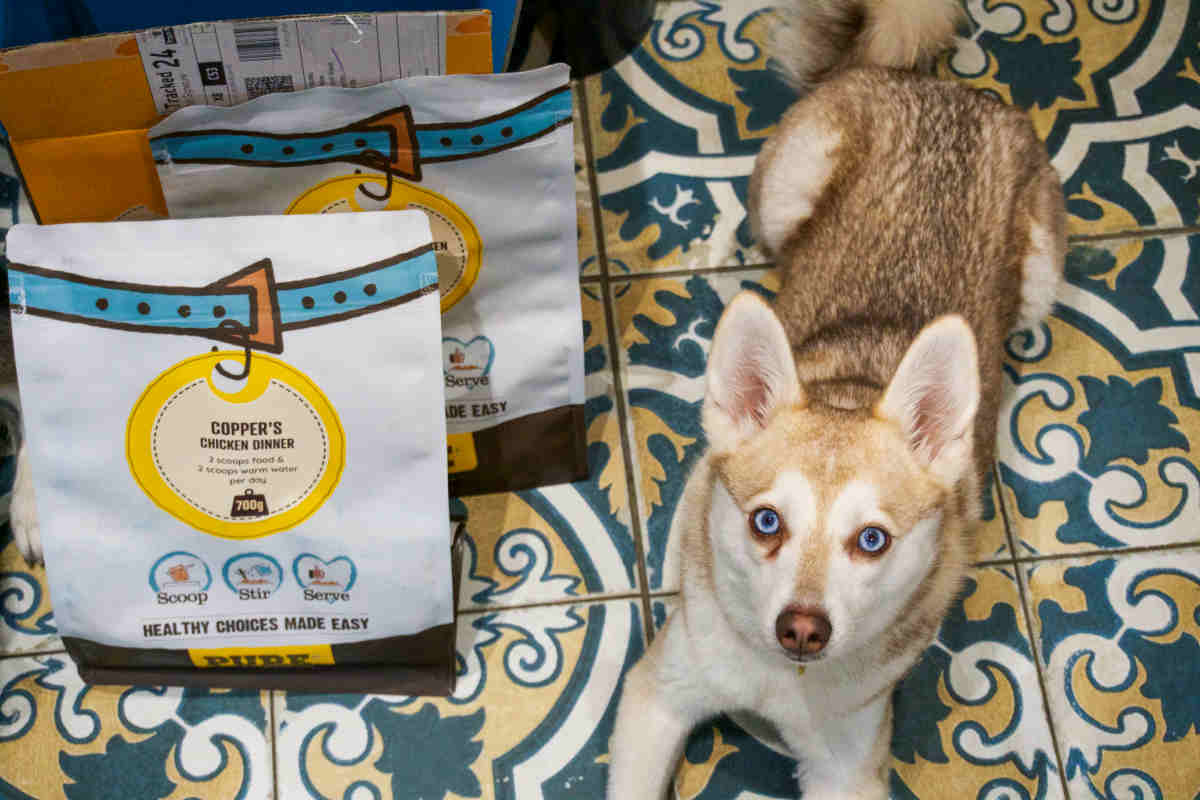 Alaskan Klee Kai with Pure Pet Food (Photo: www.hellobark.com)