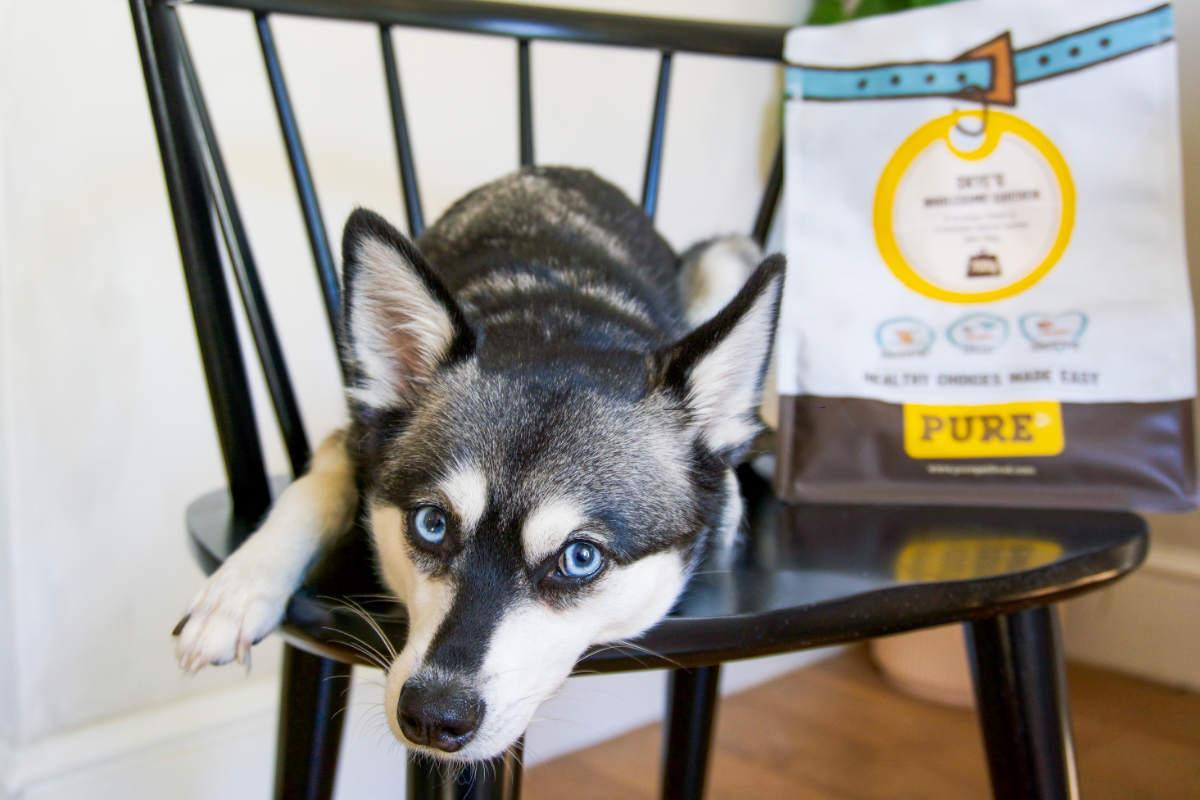 Alaskan Klee Kai with Pure Pet Food (Photo: www.hellobark.com)