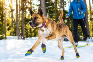 Dog boots: Everything you need to know