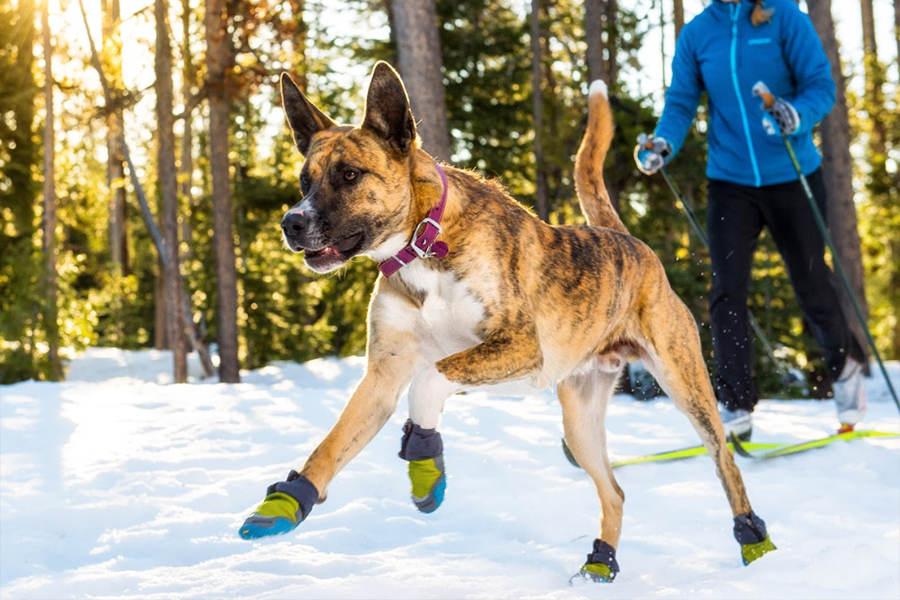 Ruffwear Polar Trex boots (Photo: Ruffwear)