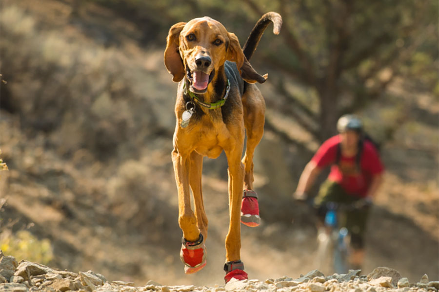 Ruffwear Grip Trex boots (Photo: Ruffwear)