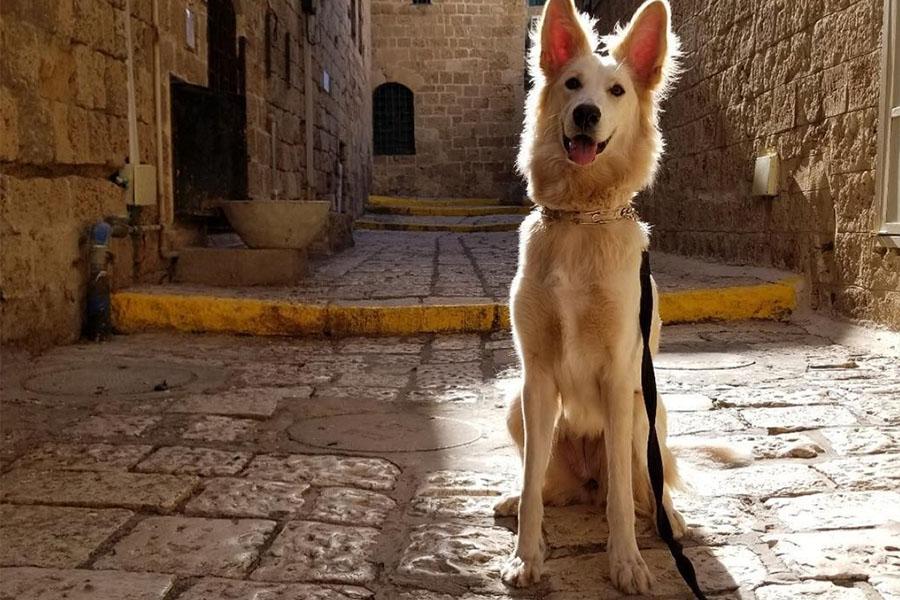 Sam the Golden Wolf (Photo: @golden_wolf_sam / Instagram)