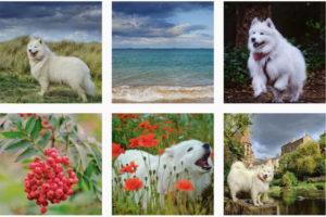 13 Free Ways to Boost Your Dog's Instagram