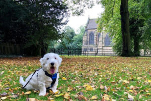 Sealyham Terrier Pros and Cons