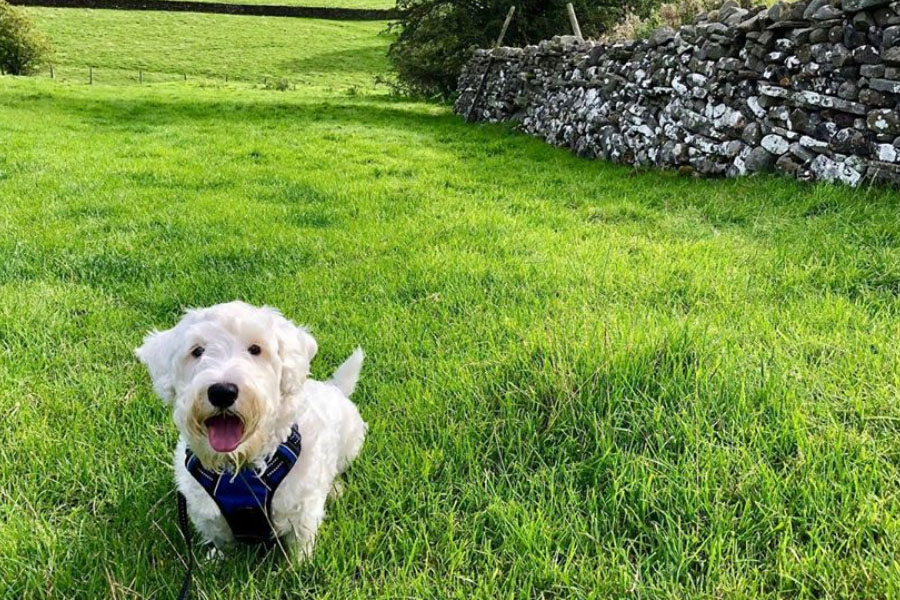 Eddie the Sealyham Terrier (Photo: @sealyhameddie / Instagram)
