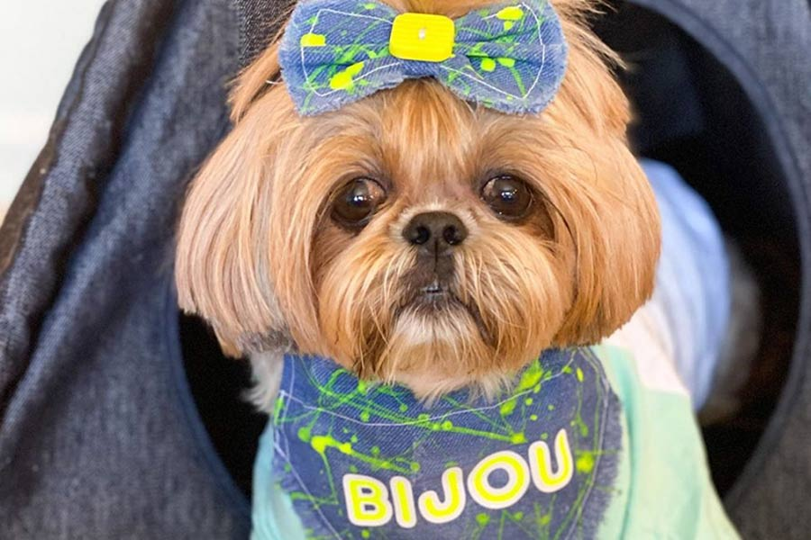 Bijou the Shih Tzu (Photo: fluffdogcrew / Instagram)