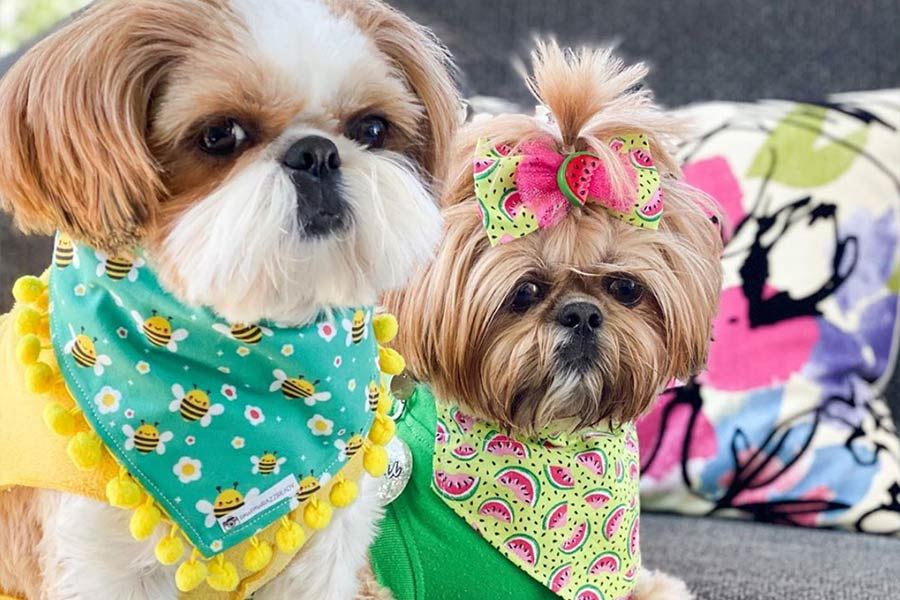 Bijou and Daphne the Shih Tzus (Photo: fluffdogcrew / Instagram)