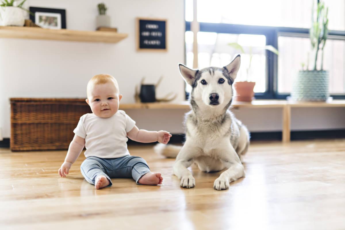 Baby chills with Siberian Husky (Photo: Adobe Stock)