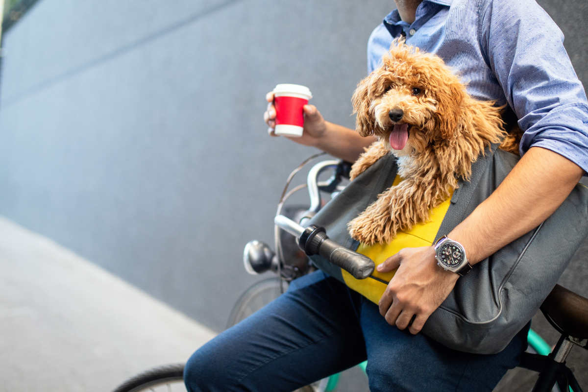 Student sips a coffee with his dog in a pet carrier (Photo: Adobe Stock)