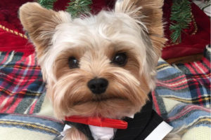 Teddy The Tiny Terrier interview