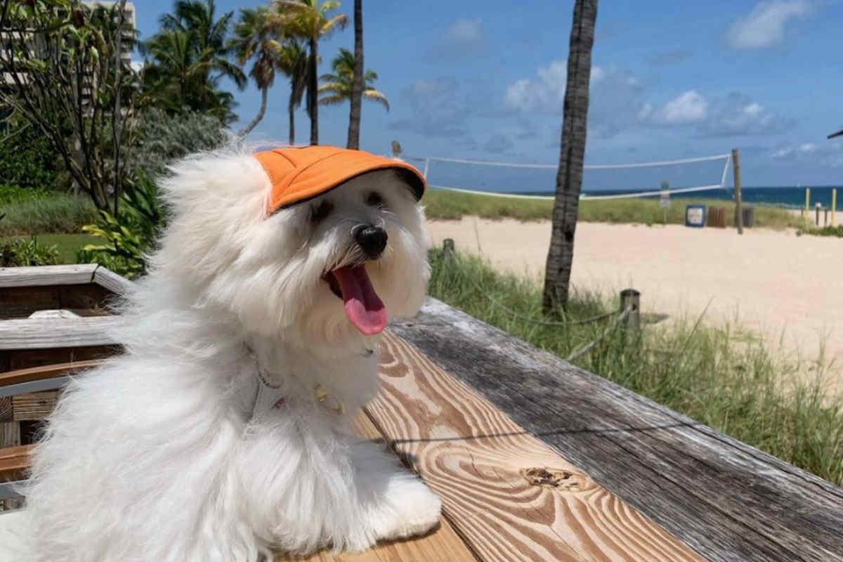 Teddy the South Florida tour guide (Photo: @southflorida_teddybear / Instagram)