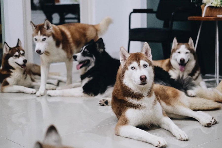 The Red Huskies (Photo: @thehuskypride / Instagram)