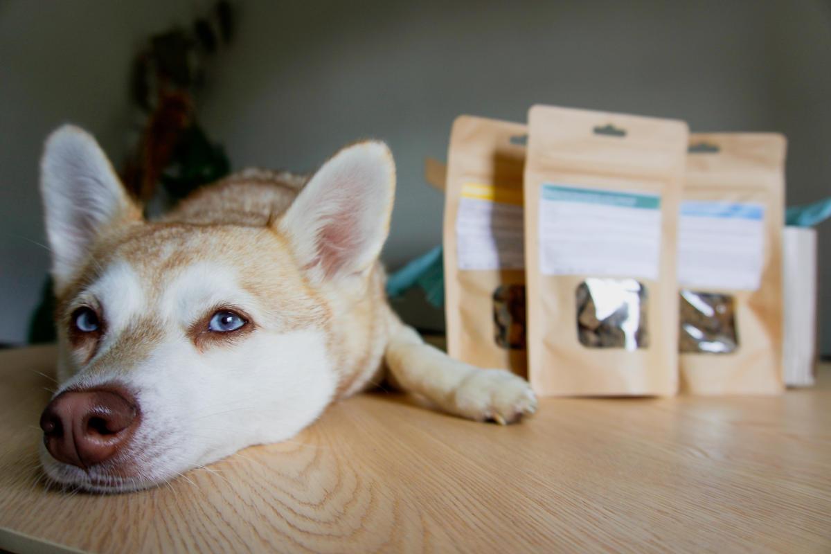 The Innocent Hound (Photo: helloBARK!)