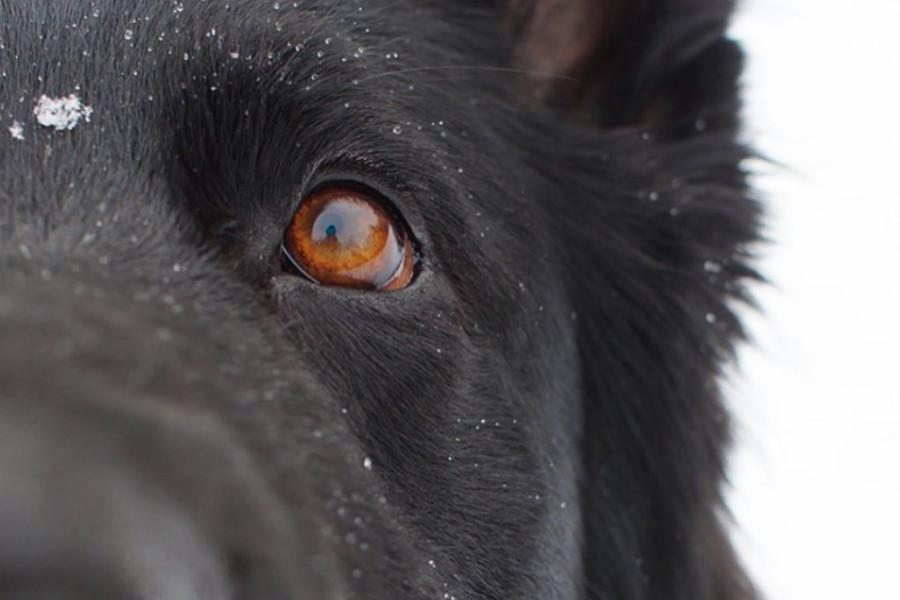 Charlie the Black Shepherd (Photo: @charlie_theblackshepherd / Instagram)