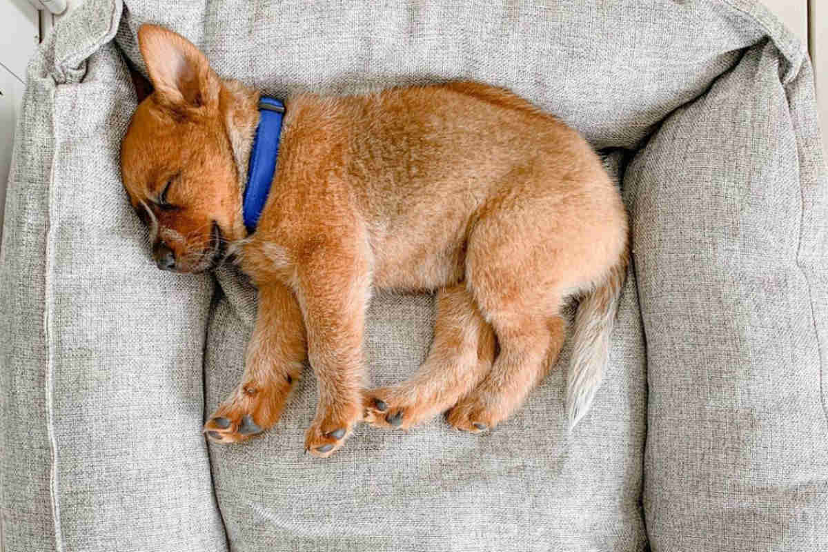 Winnie the Cattle Dog (Photo: winniethecattledog / Instagram)