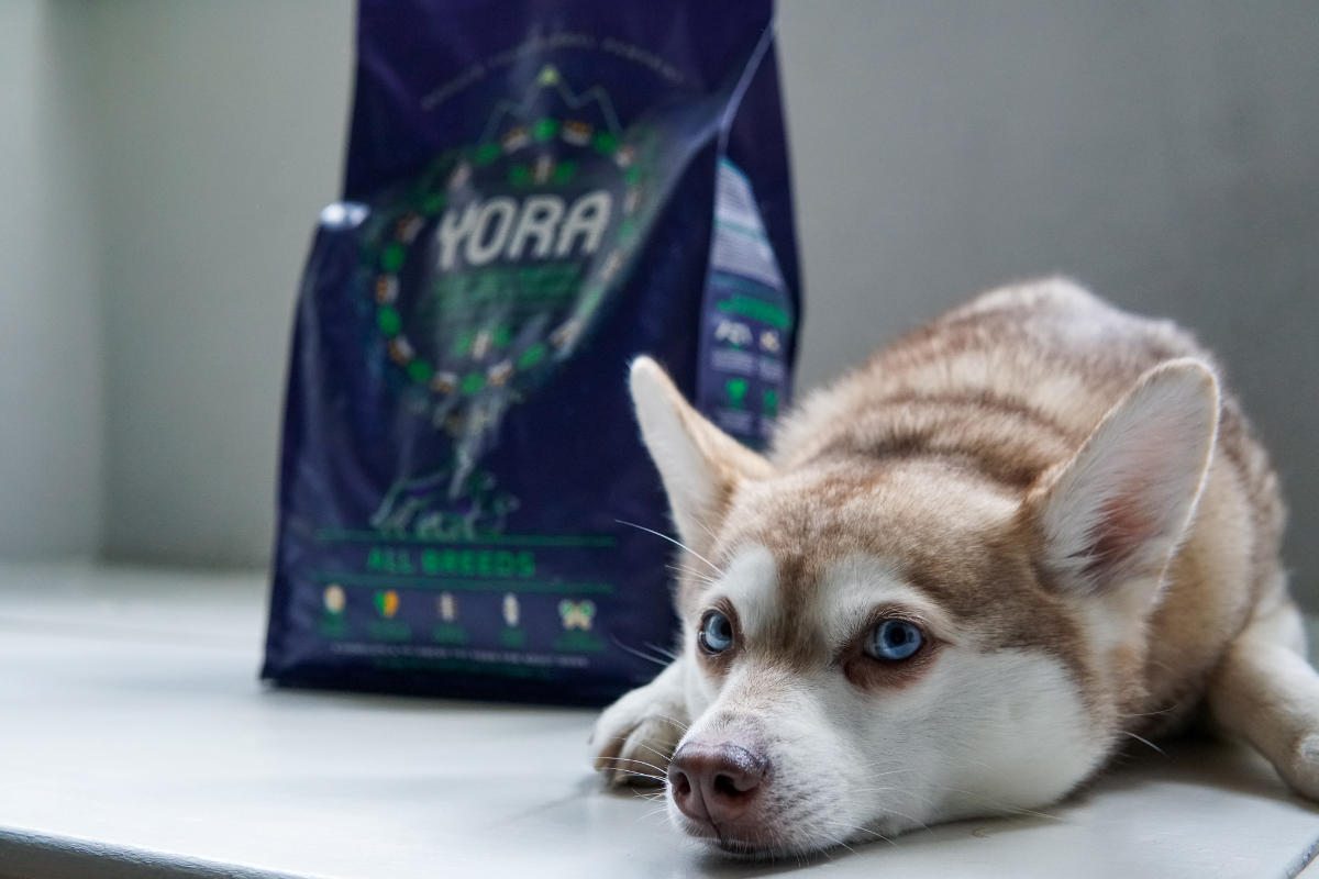 Yora Insect Protein All Breeds Dog Food (Photo: @lifewithkleekai / Instagram)