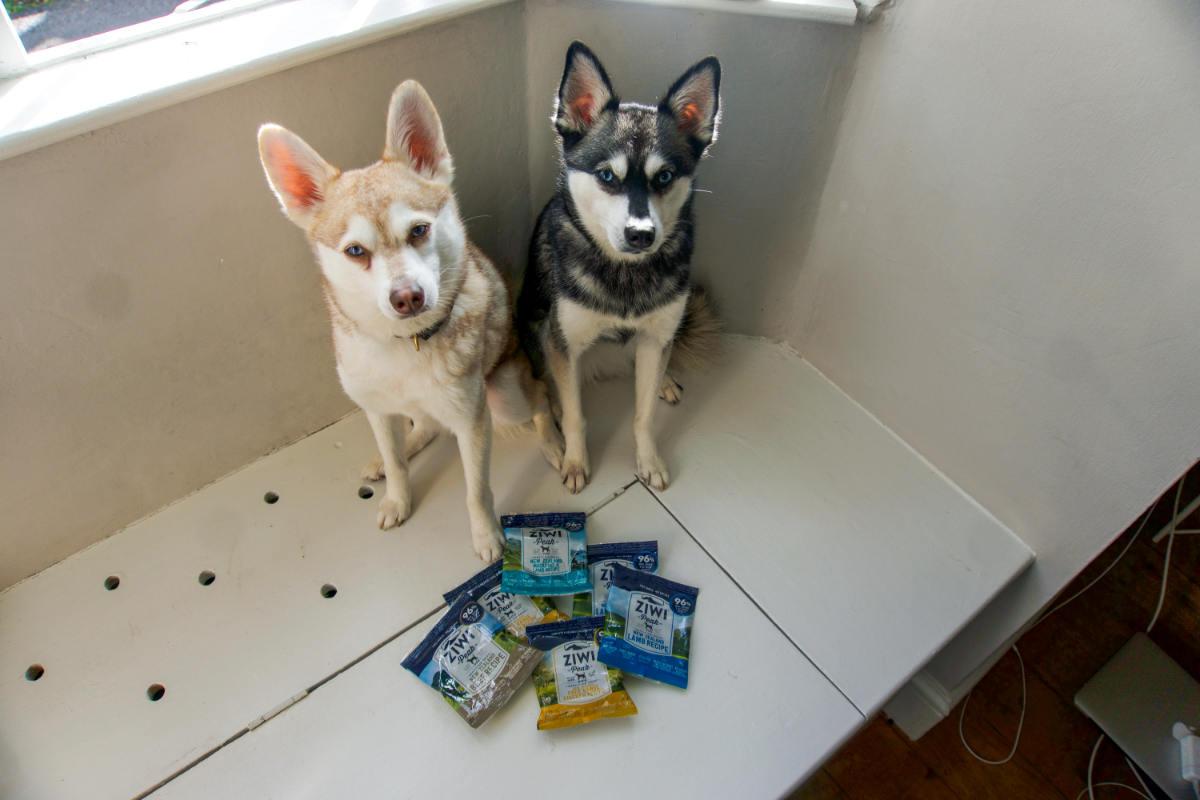 Alaskan Klee Kai with Ziwi air-dried dog food (Photo: www.hellobark.com)